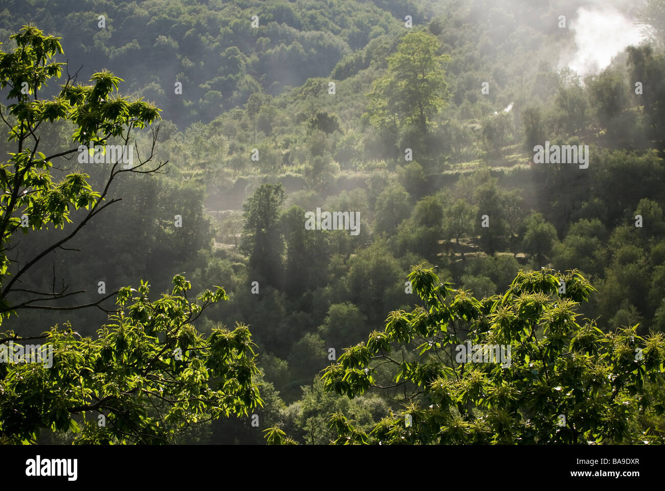photograph of brush fire smoke in hilly countryside - Stock Image