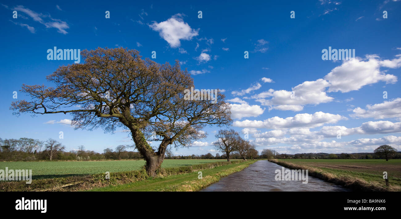 Trees on the Coventry Canal under a beautiful sky - Stock Image