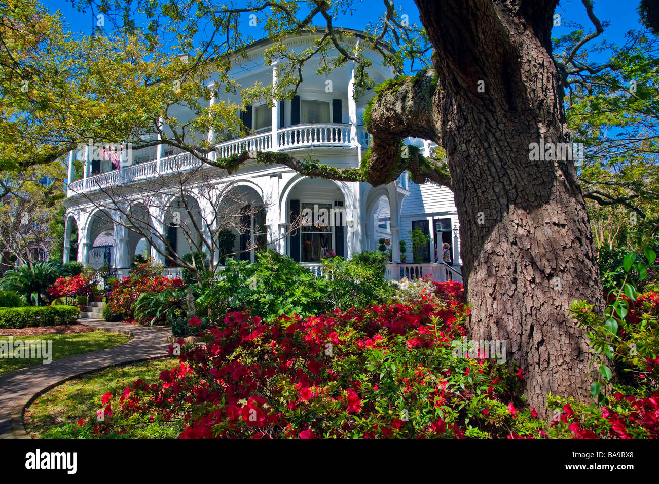 Garden with azaleas in bloom at Villa with Southern Architecture and Design in Charleston South Carolina USA North - Stock Image