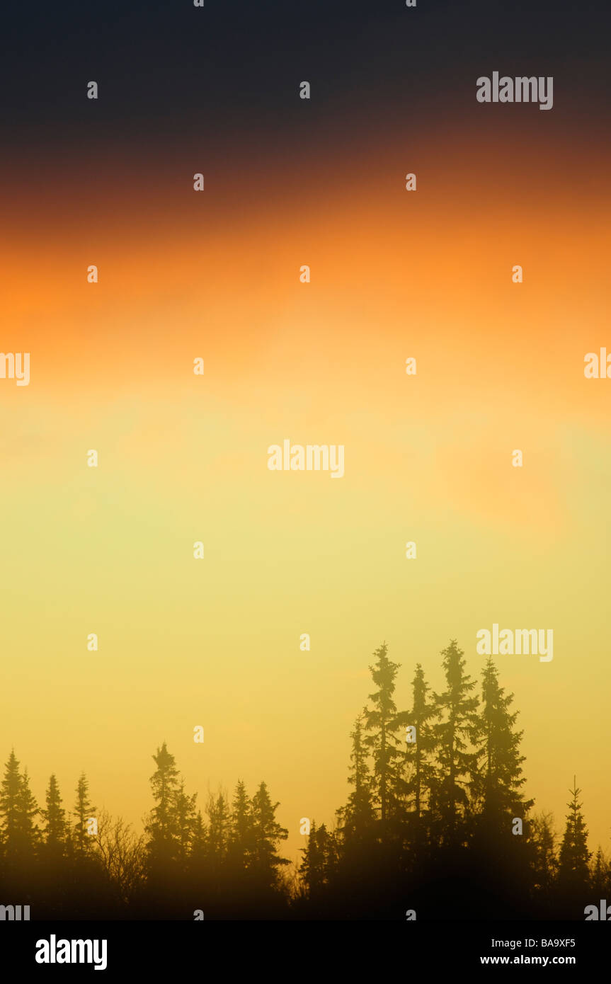 Sun rise over a forest Sweden - Stock Image