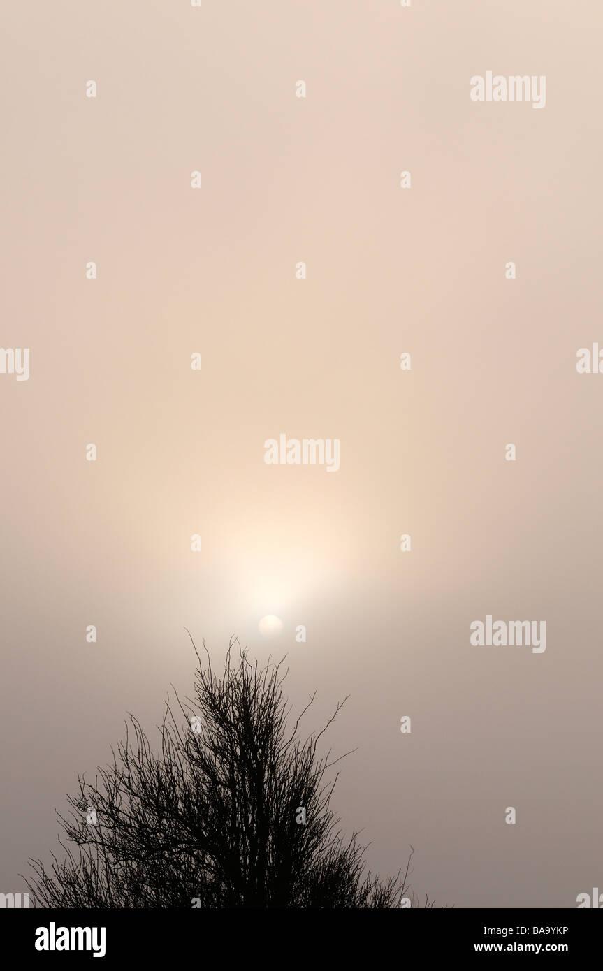 Sun above tree top Bohuslan Sweden - Stock Image