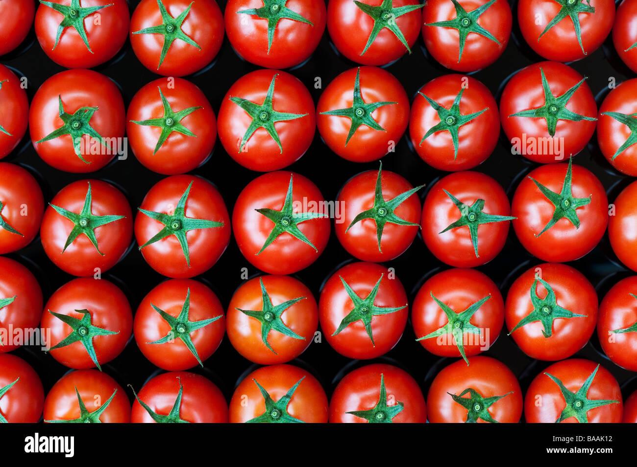 Solanum lycopersicum. Tomato pattern on reflective black background - Stock Image