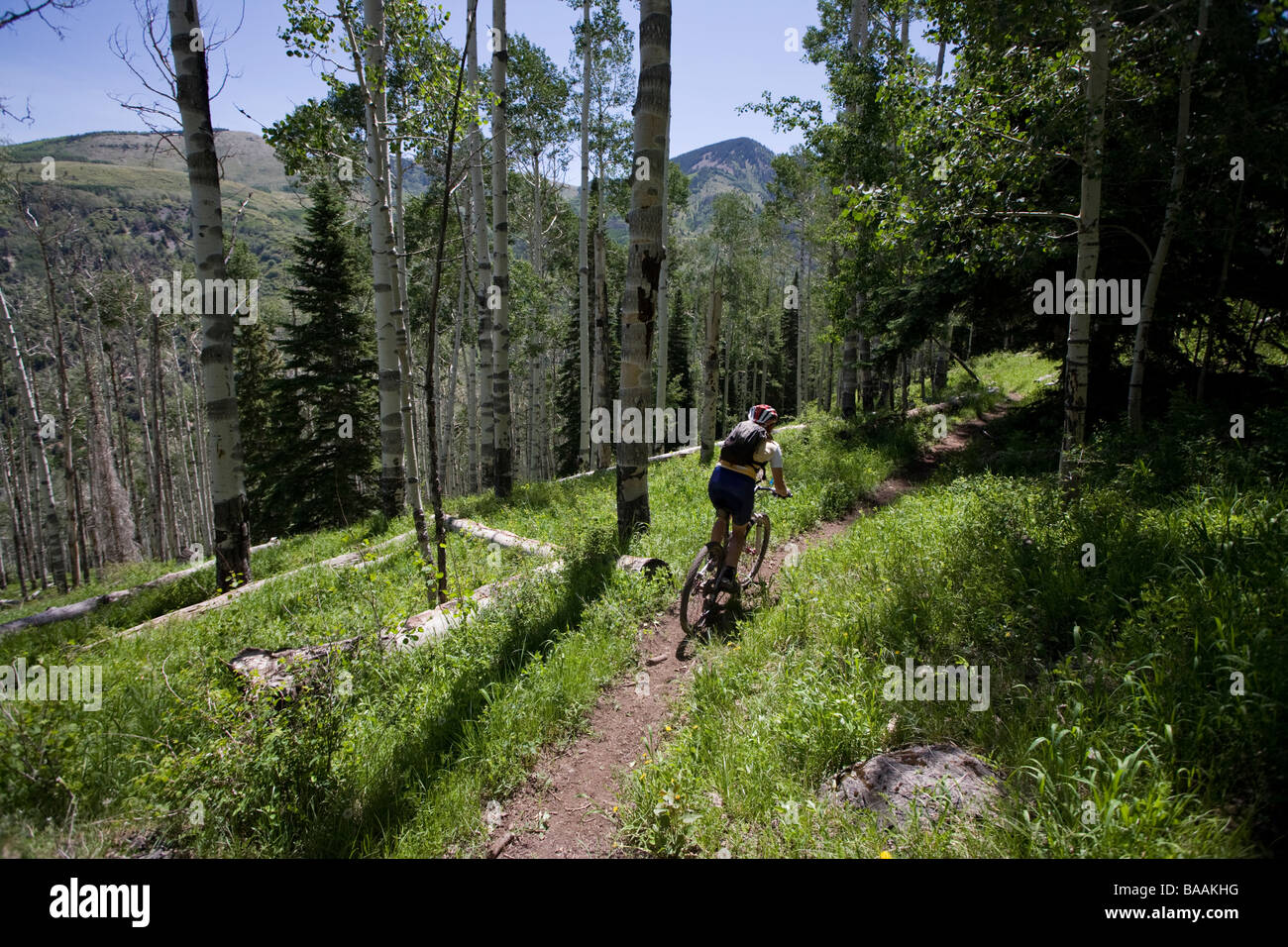 Woman mountain biking in the Abajo Mountains near Montecello, Utah. - Stock Image
