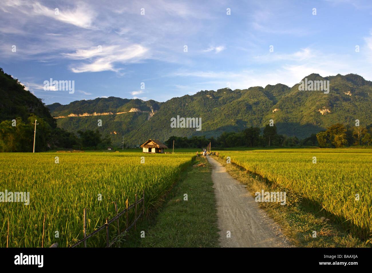Beautiful landscape with green mountains, rice fileds around Mai Chau minority village. Vietnam - Stock Image