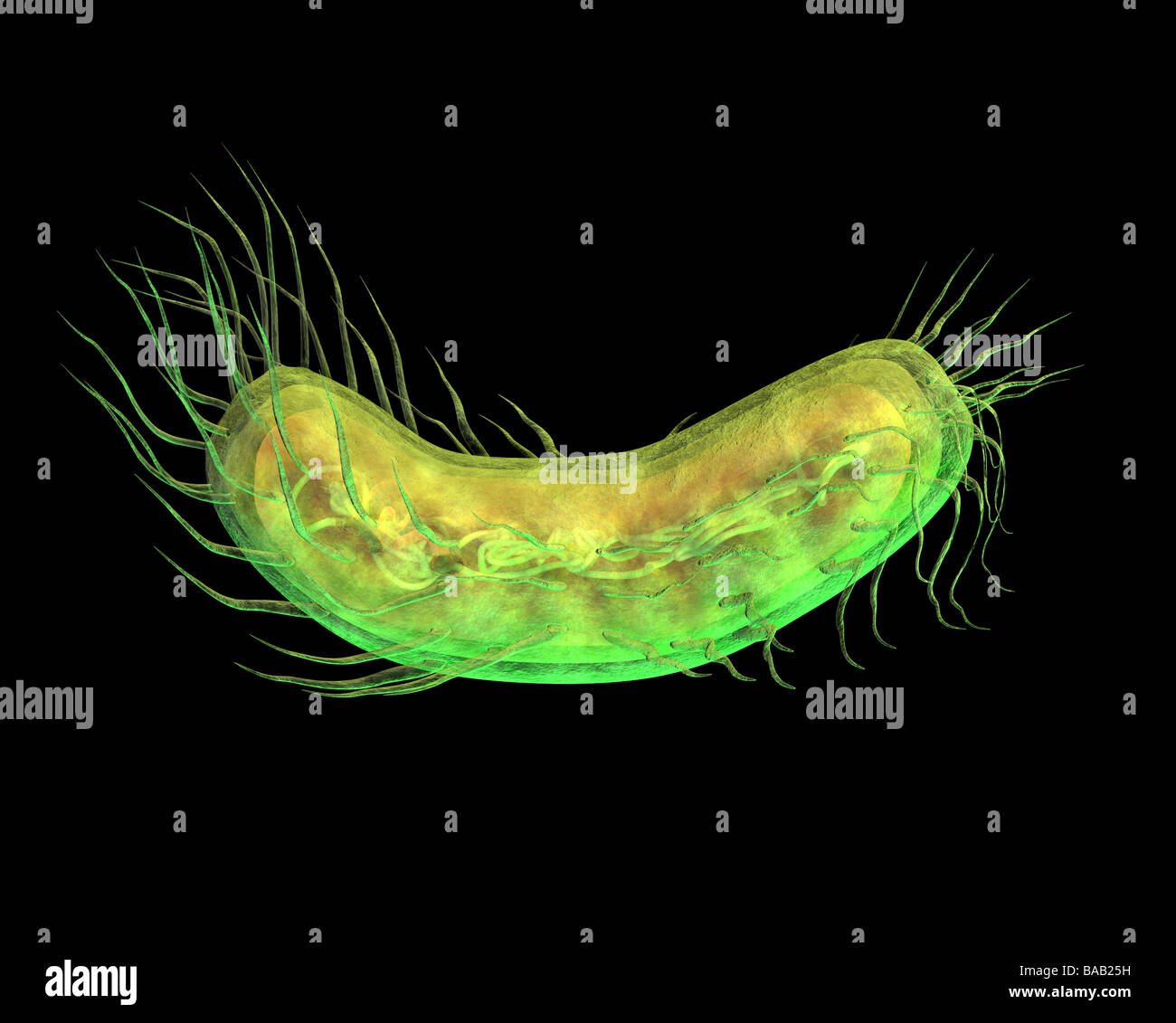 Bacteria - Stock Image
