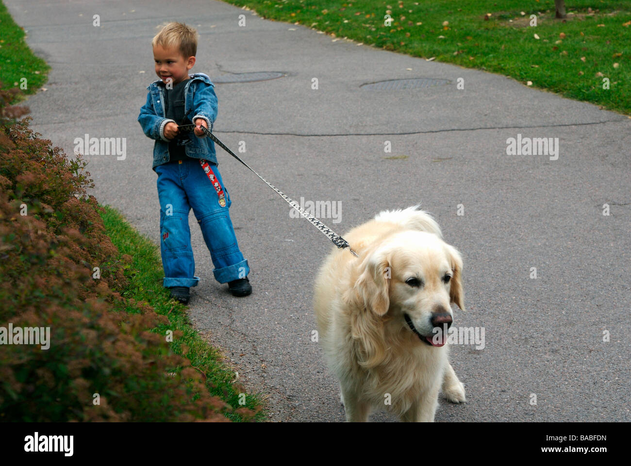 A boy walking a dog Linkoping Sweden - Stock Image