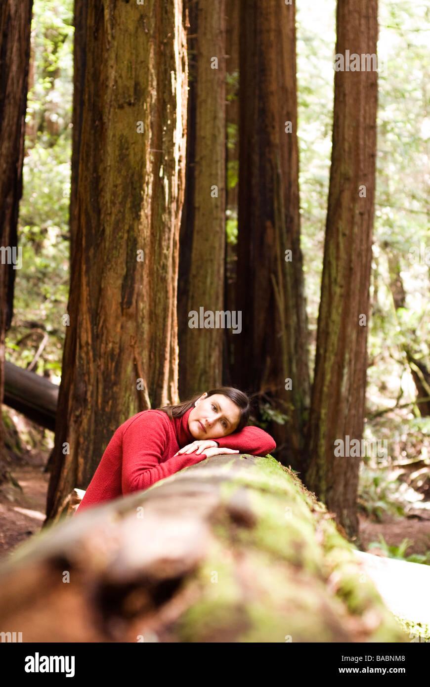 Sequoia Forest in California Stock Photo