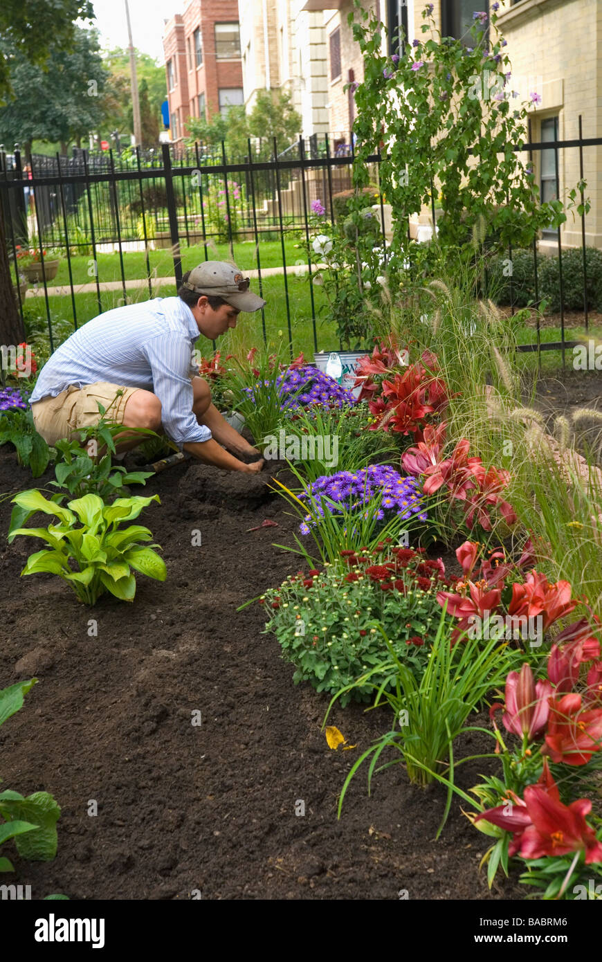 Hispanic Italian landscaping architect working in raised perennial flower garden for apartment building in Chicago - Stock Image