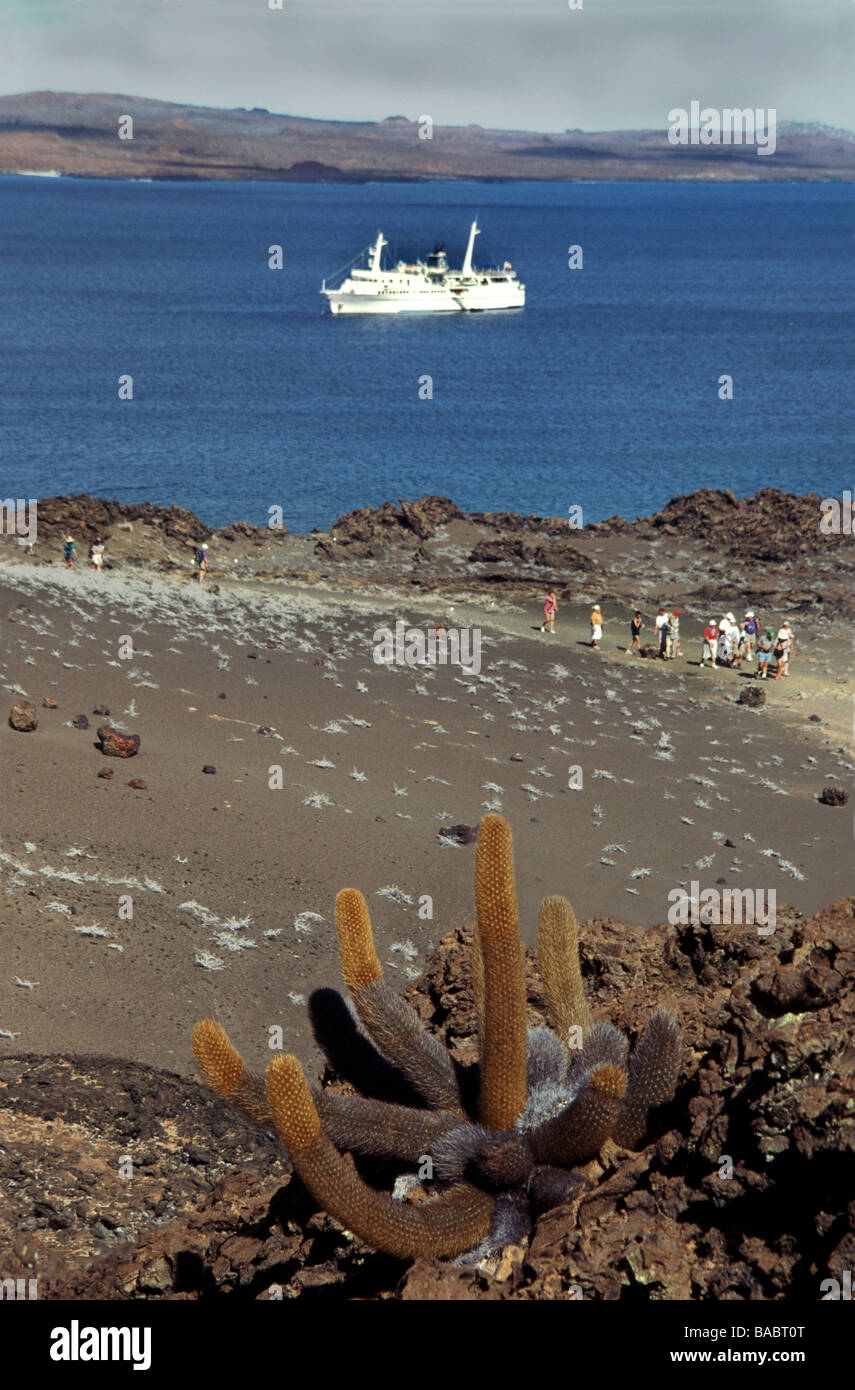 Galapagos Islands. Bartholomew Island.View from near the summit with the Lava cactus 'Brachycereus nesioticus.'. - Stock Image