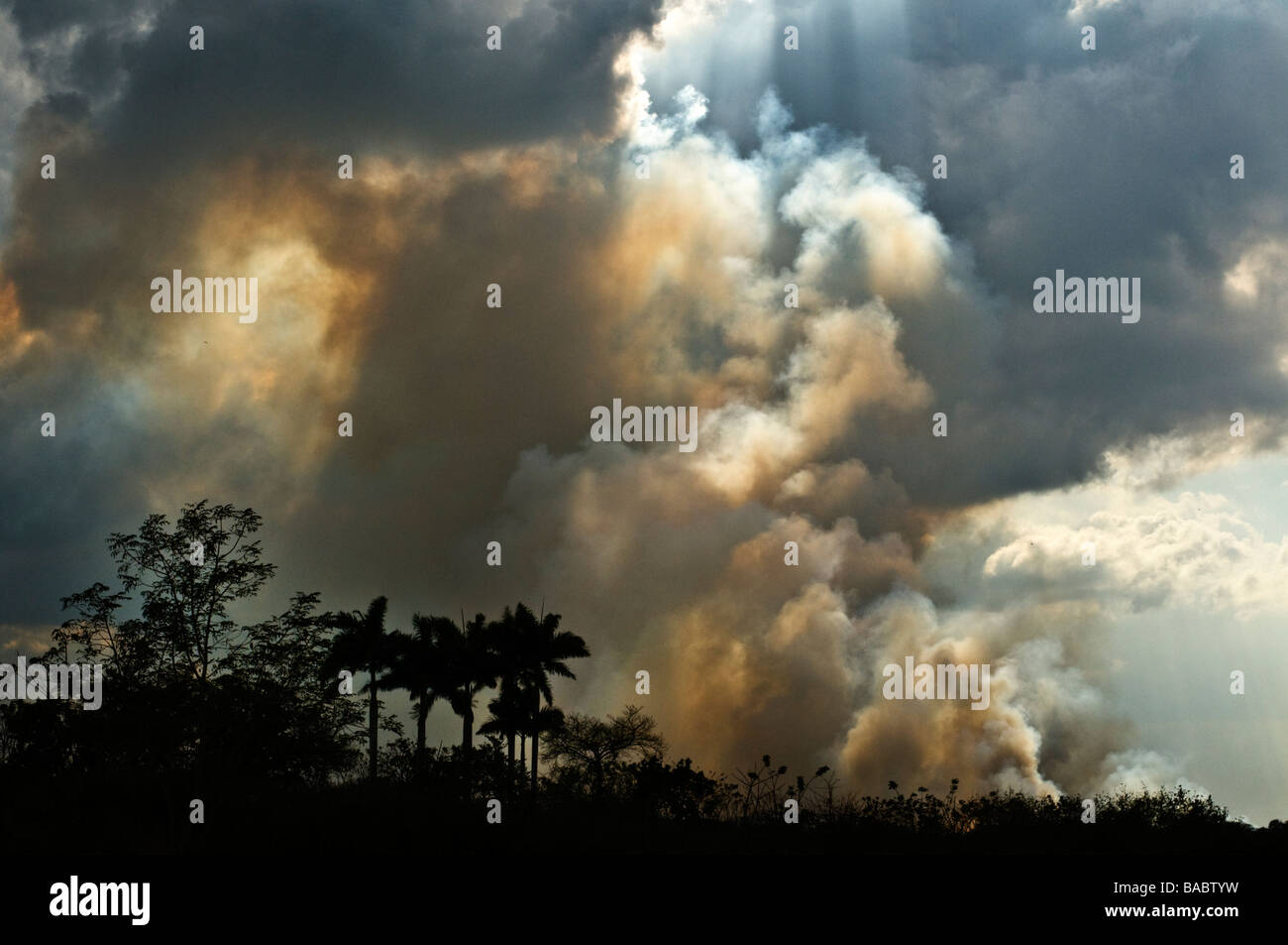 Fire storm over the fields of sugar cane in rural Cuba. Stock Photo