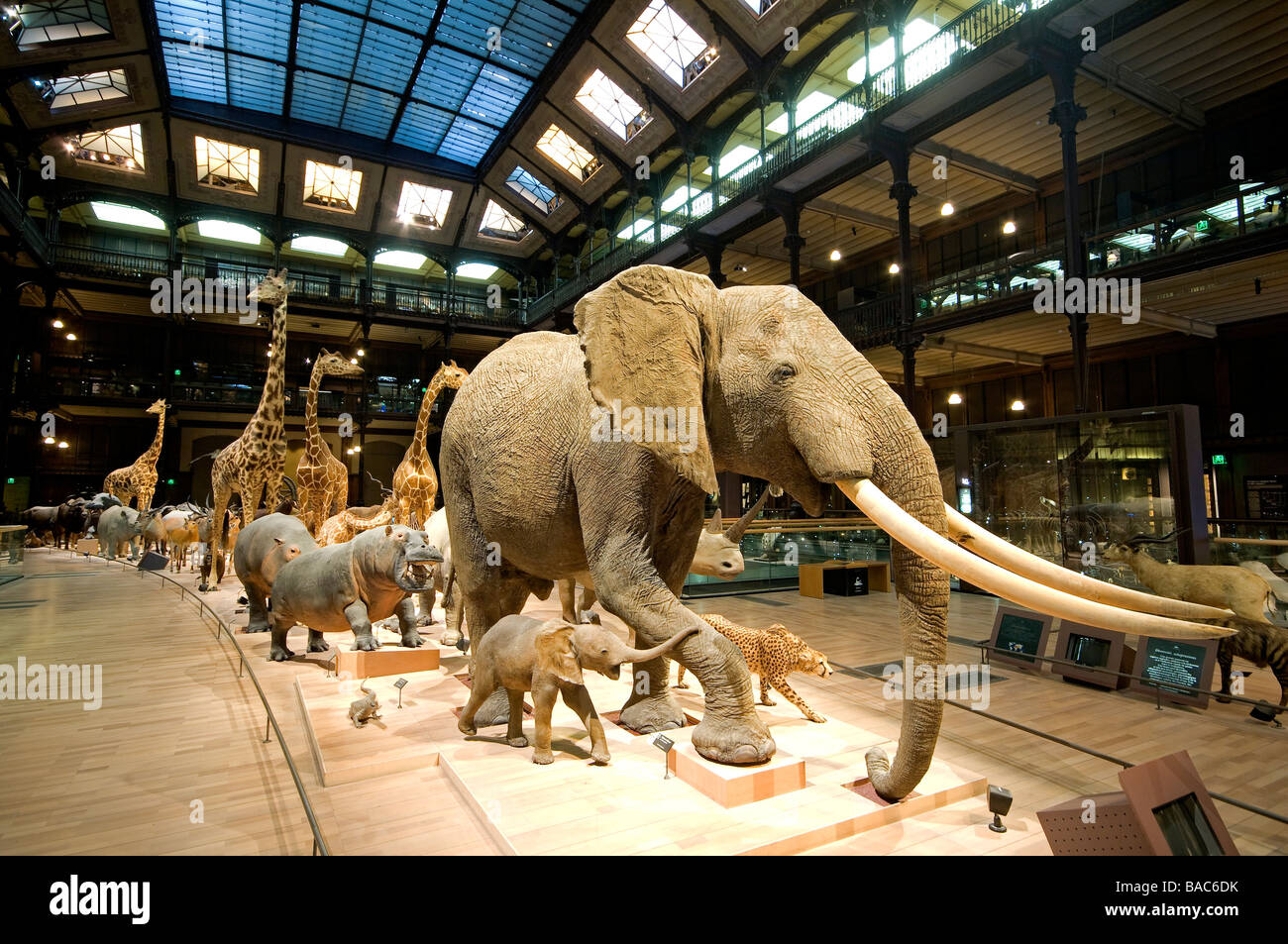 Where Is The Museum Of Natural History In Paris