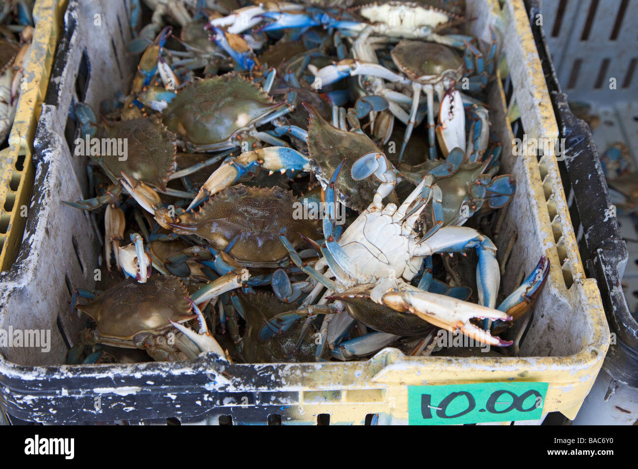 Westwego Louisiana Blue crabs on sale at a roadside seafood market - Stock Image