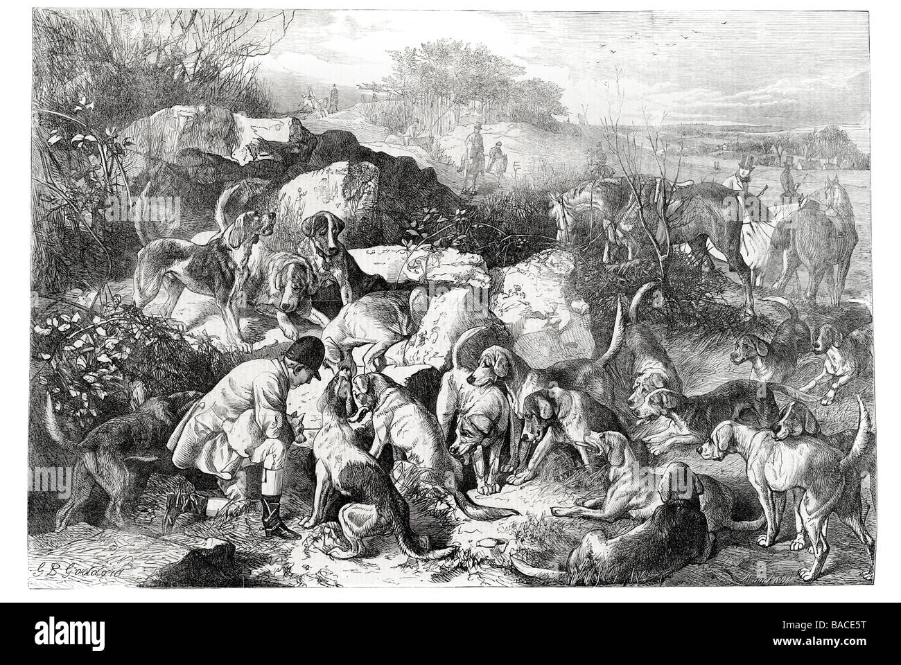 gone to ground drawn by g b goddard Fox hunting tracking chase killing 1867 - Stock Image