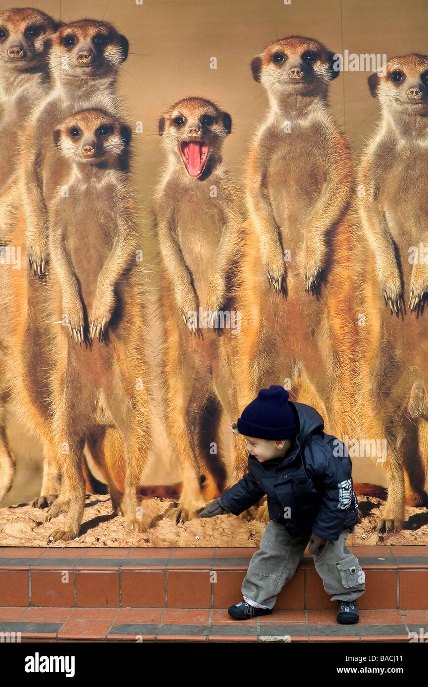 United Kingdom, London, Regent's Park, zoo, child in front of a image of meerkats Stock Photo