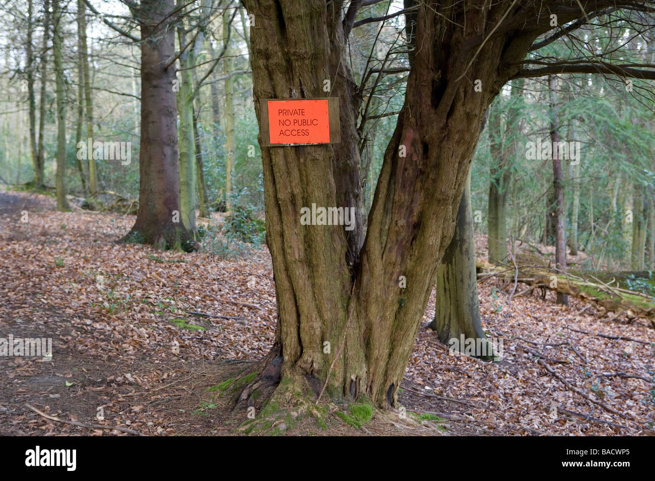 Sign on Ewe tree warning walkers there is no public access Liphook Hampshire England United kingdom - Stock Image