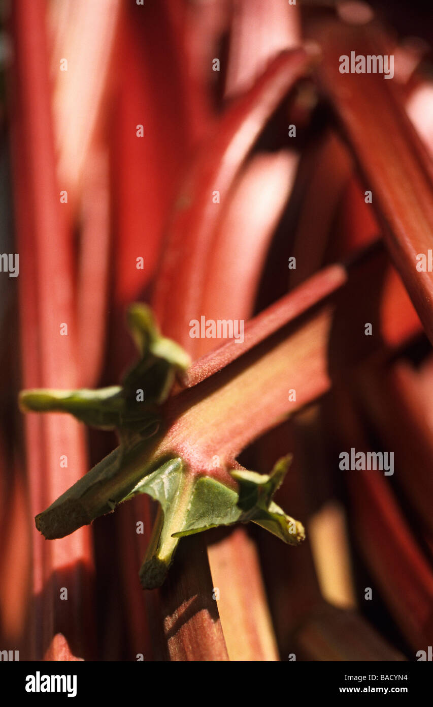 France, Nord, Lille, close-up of a stall rhubarb a producer integrating farming Stock Photo