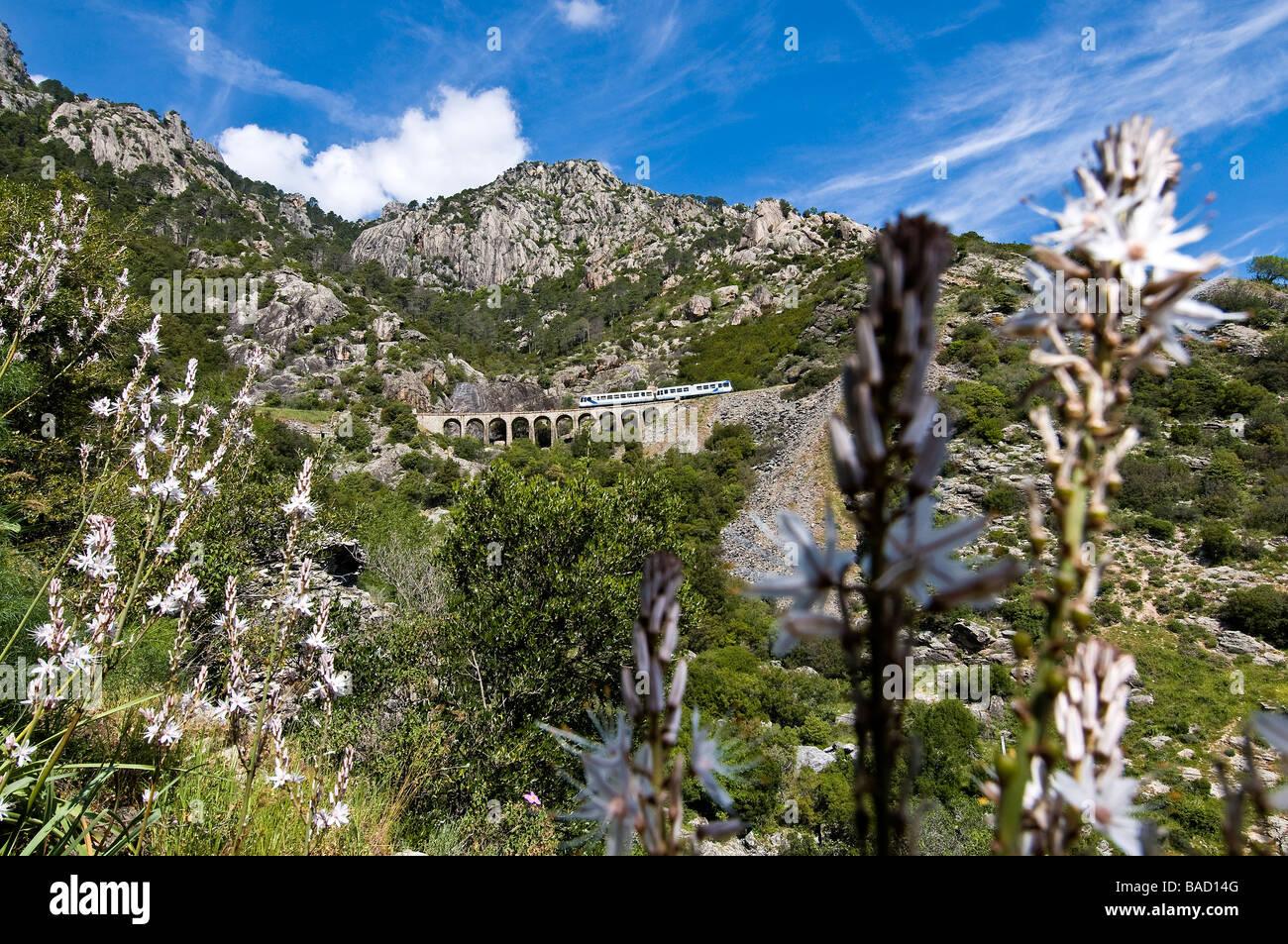 France, Haute Corse, the U Trinighellu, small train, on a viaduct before arriving at Venaco - Stock Image