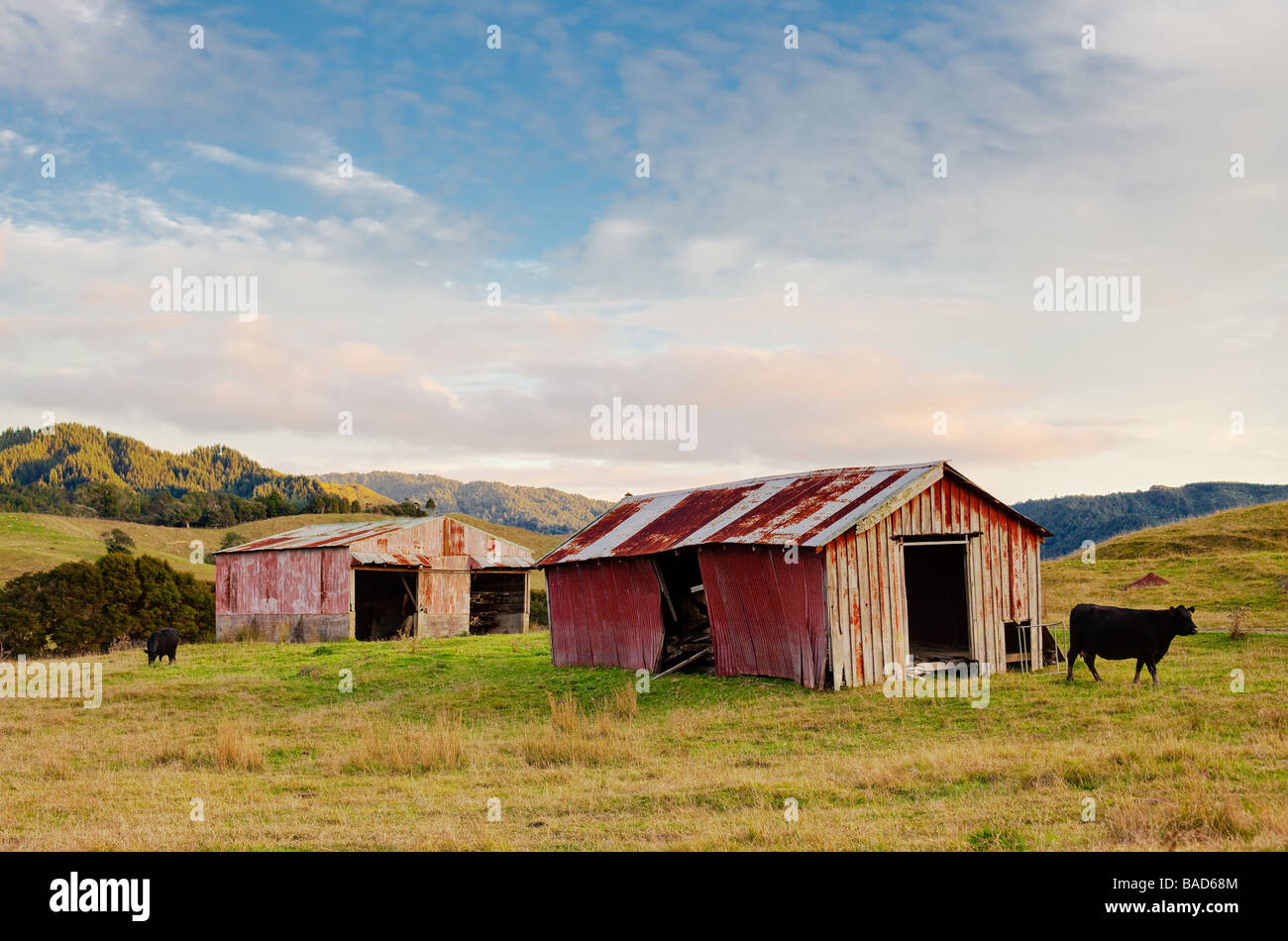 I love these old weathered barns on the New Zealand landscapes. I merged three bracketed exposures to capture the - Stock Image