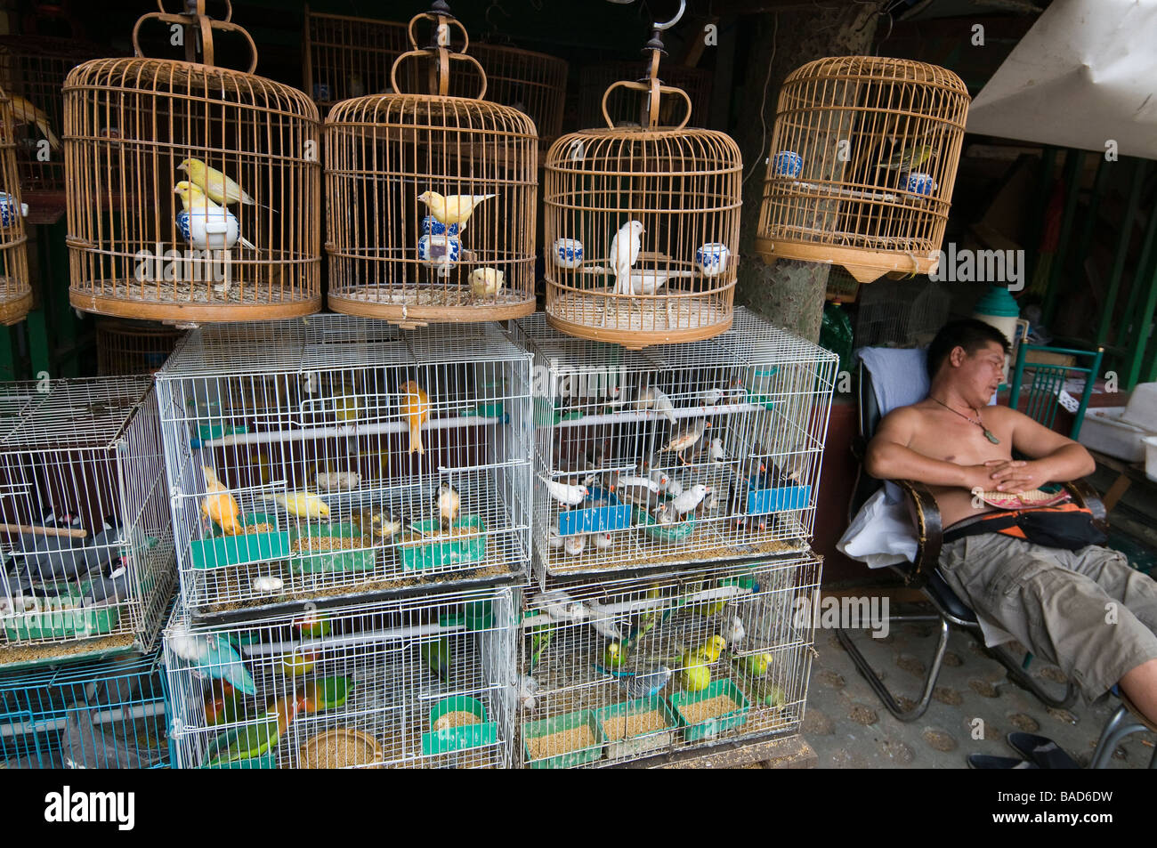 Caged song birds are for sale at the Shilihegiao Pet Market, Beijing, China - Stock Image