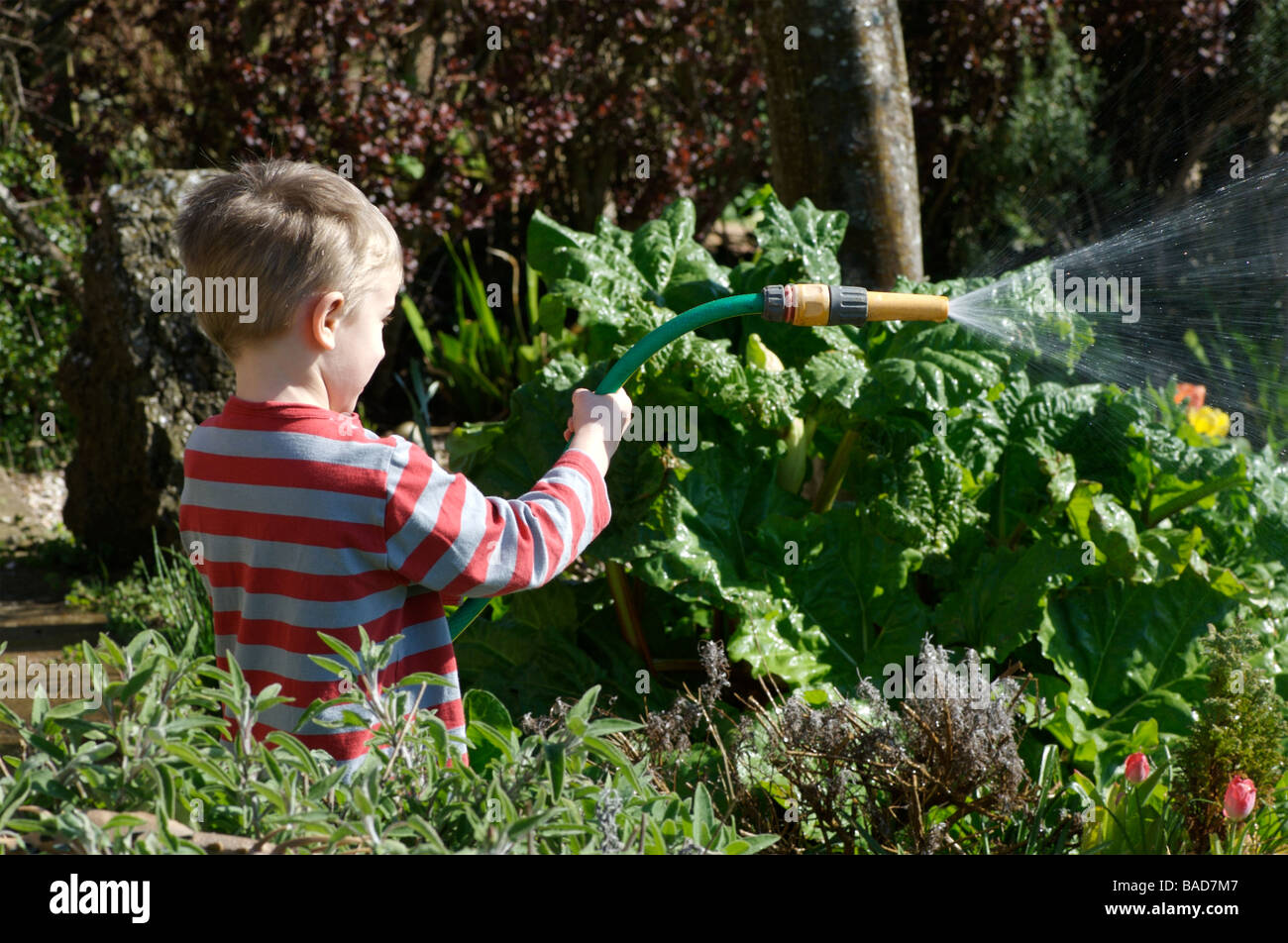 A toddler watering the garden with a hose pipe - Stock Image