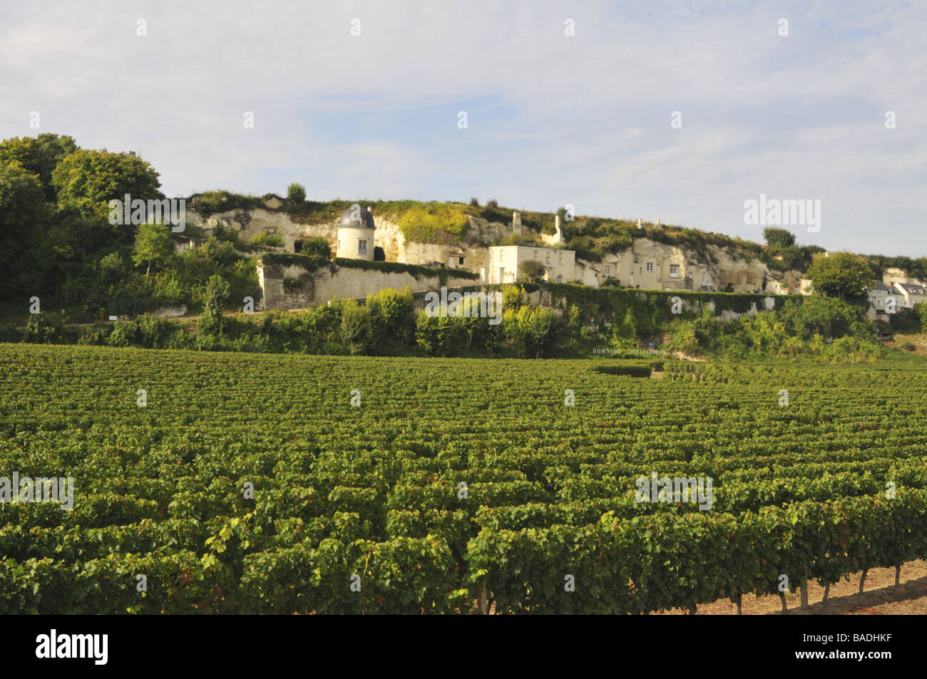 Domaine Filliatreau vineyard in the Loire valley France - Stock Image