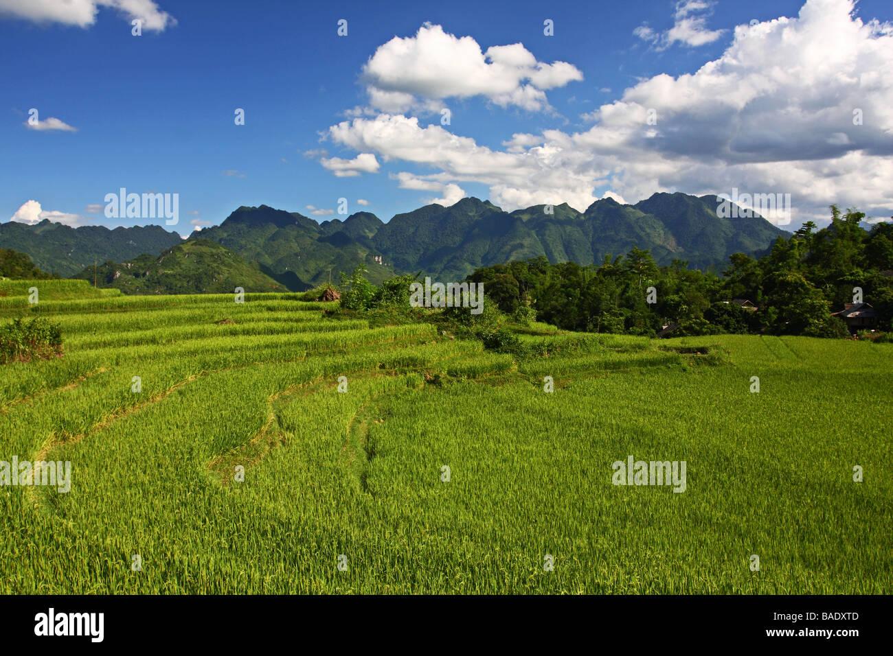 Beautiful landscape with green mountains and rice fileds around Mai Chau minority village. Vietnam - Stock Image