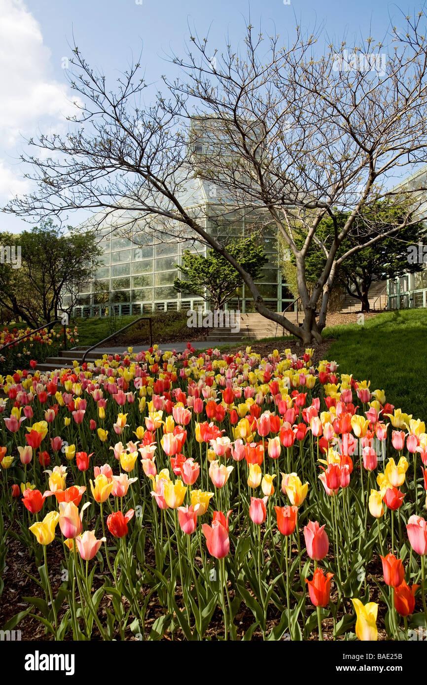 United States New York Brooklyn Botanical Garden In Spring