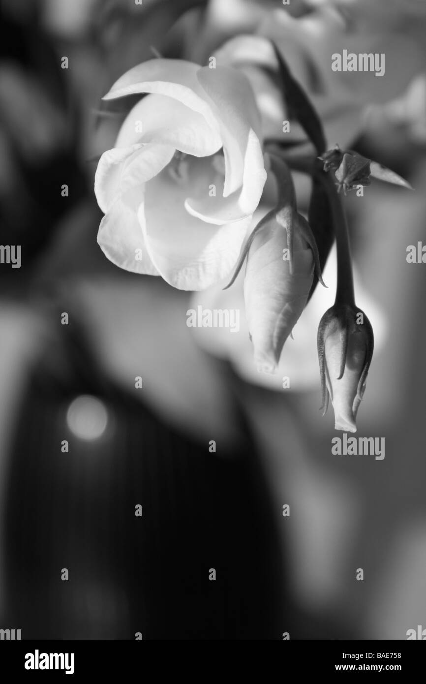 Flower Vase Black And White Stock Photos Images Alamy
