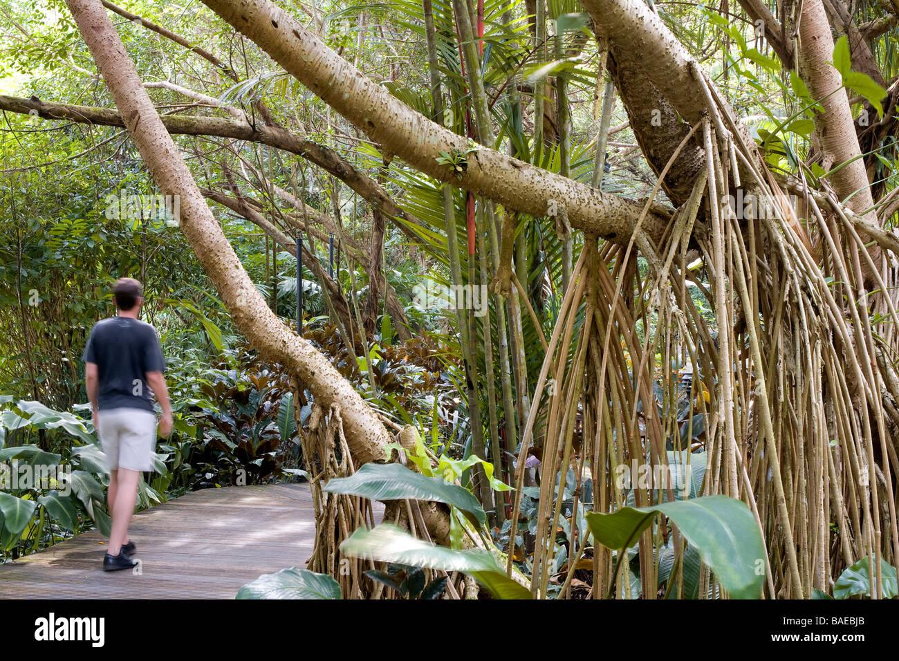 Ginger Garden Botanic Garden Botanical Stock Photos & Ginger Garden ...