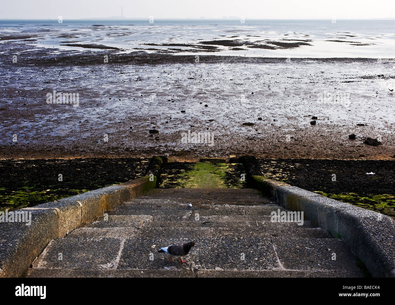 A pigeon on concrete steps leading down to the beach at Southend on Sea in Essex.  Photo by Gordon Scammell - Stock Image