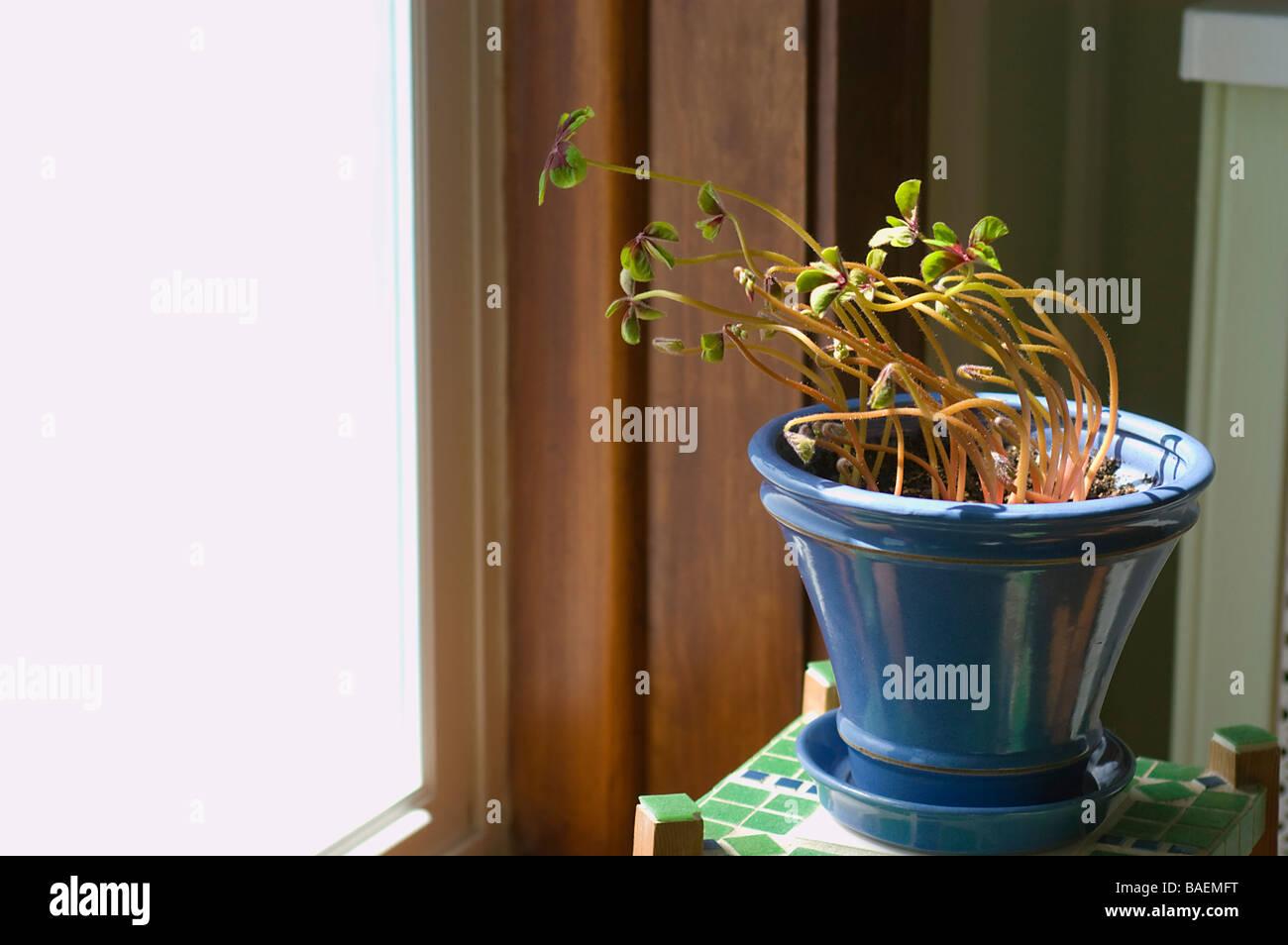 Phototropism Stock Photos Phototropism Stock Images Alamy