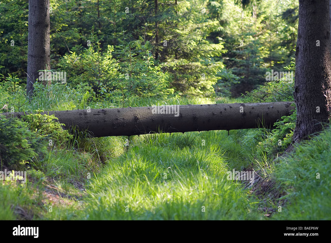 Shot of the old overgrown forest road - Stock Image