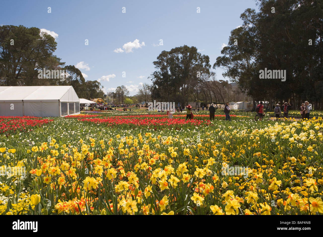 Red Yellow Flowering Bulbs Commonwealth Park Canberra Australian