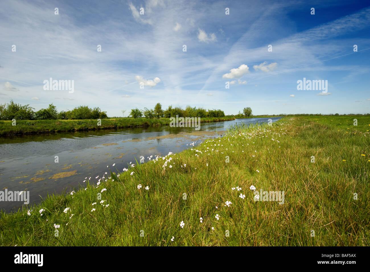 A beautiful dutch polder landscape in springtime - Stock Image