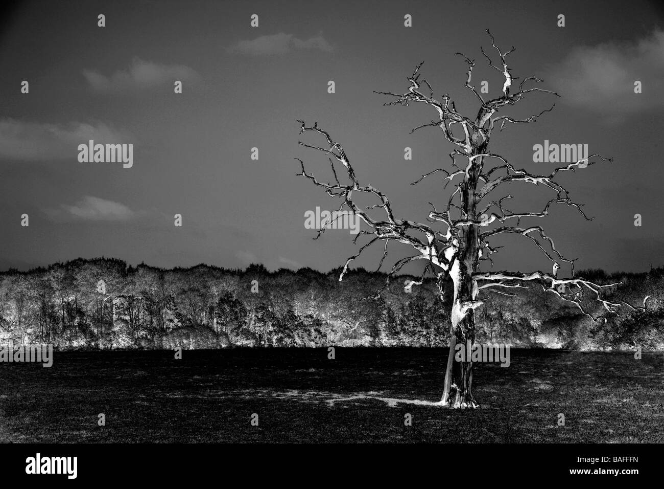 A surreal sabatier image of a single tree in a field. - Stock Image