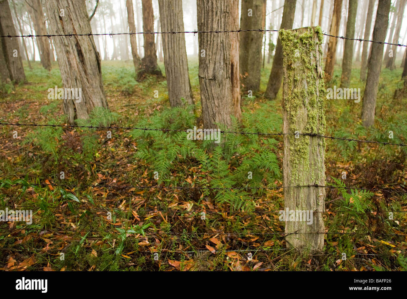 a mossy fence in a misty forest - Stock Image