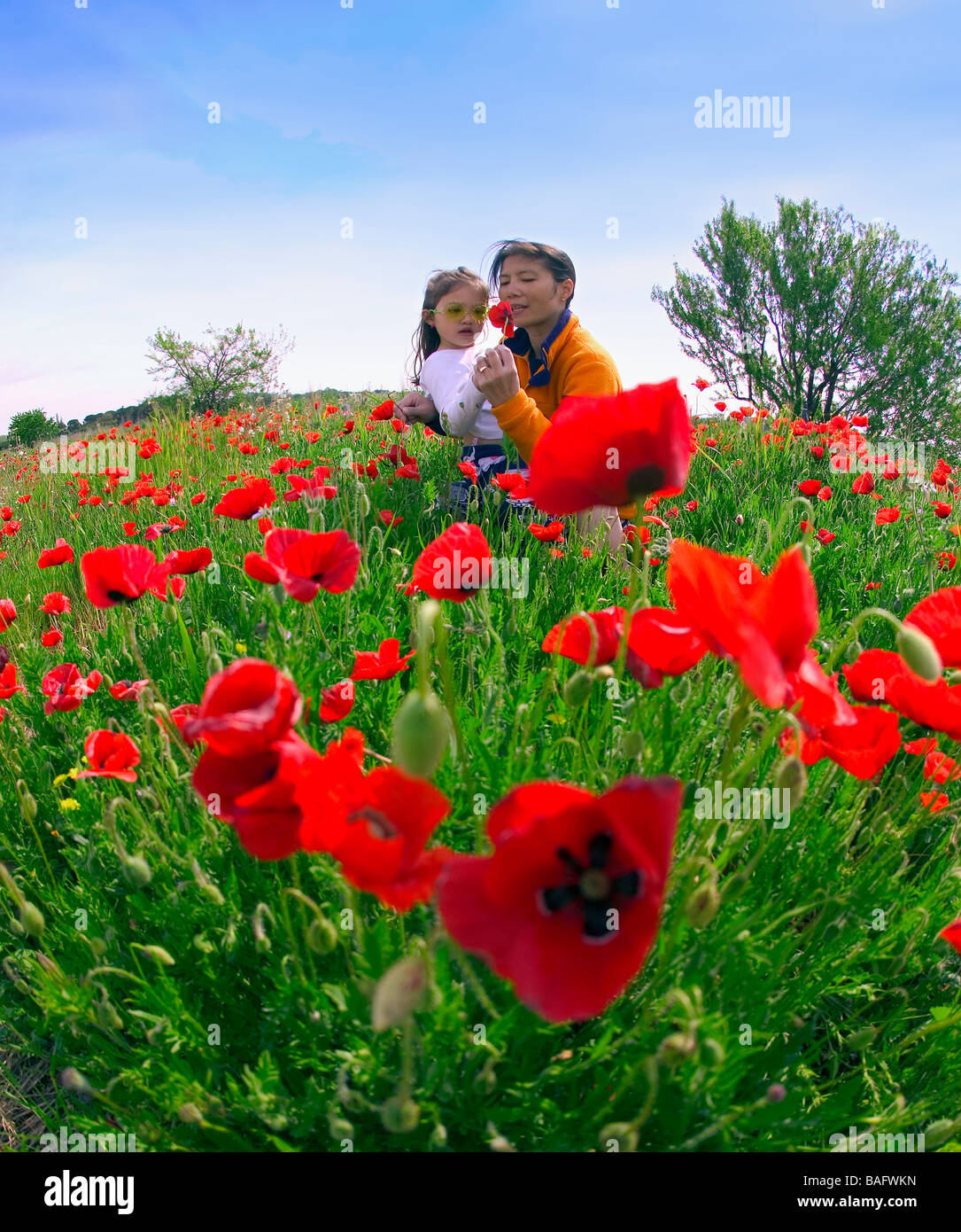Mother and daughter in poppy field; Saint-Rémy-de-Provence, Provence, France - Stock Image