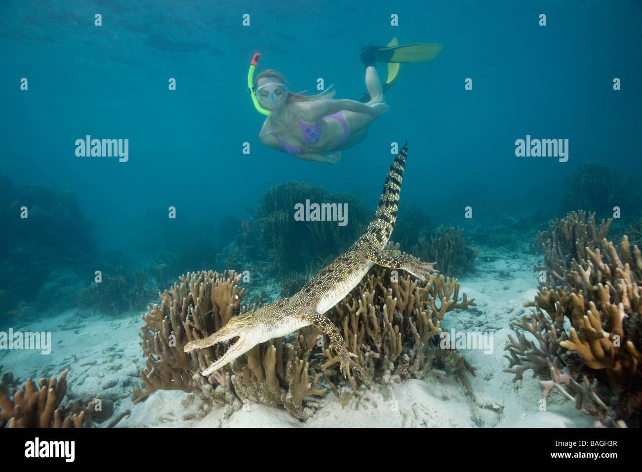 Skin Diver meets Saltwater Crocodile Crocodylus porosus Micronesia Palau - Stock Image
