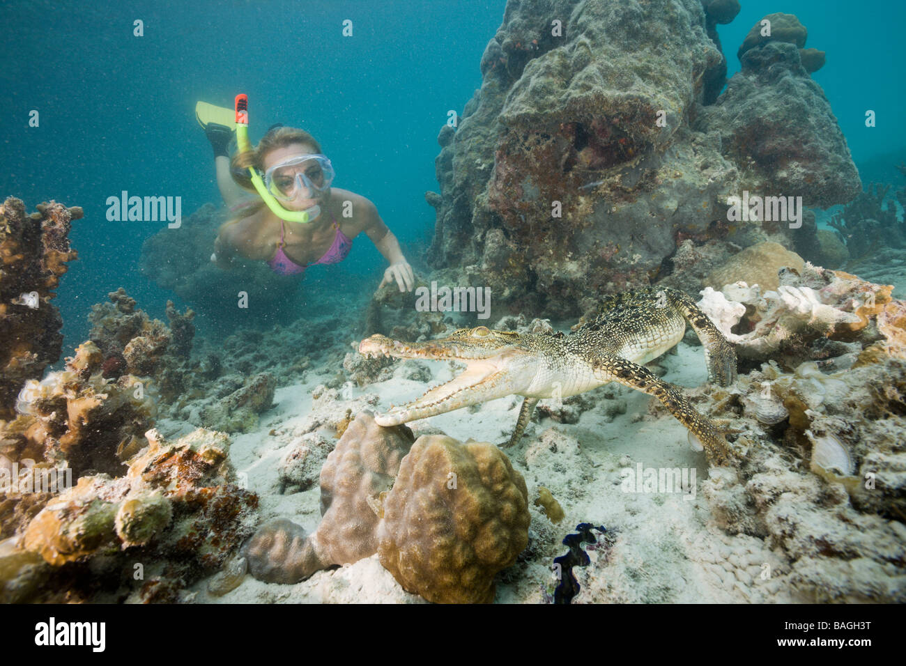 Skin Diver meets Saltwater Crocodile Crocodylus porosus Micronesia Palau Stock Photo