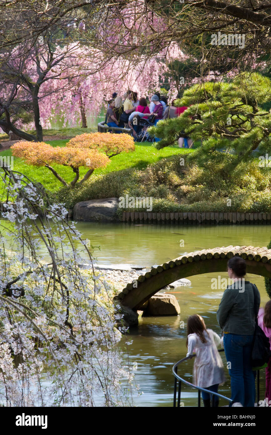 Cherry trees flowering means it's April at the Japanese Garden at Brooklyn Botanical New York City - Stock Image