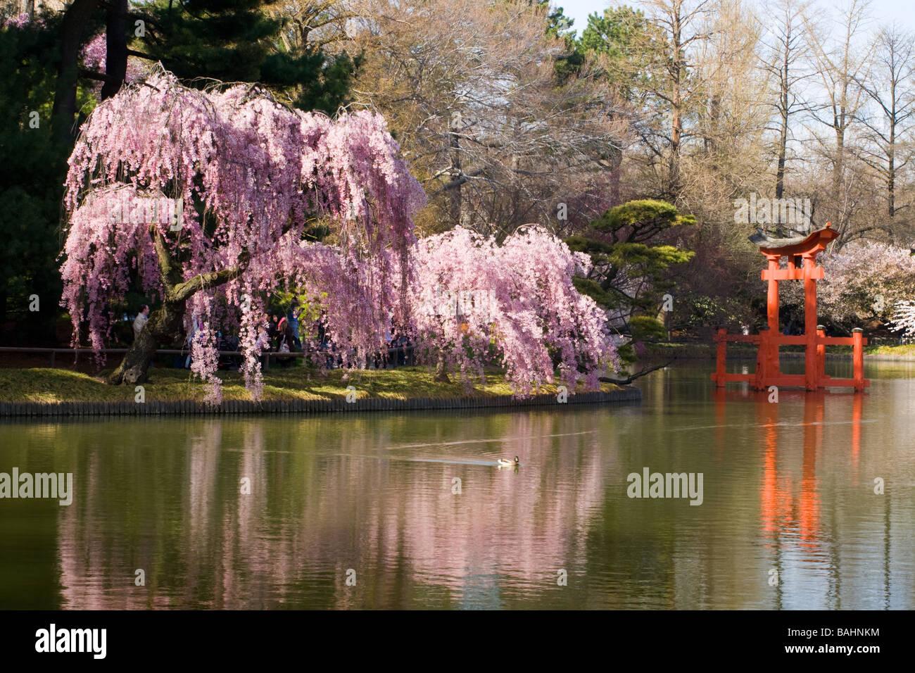 Brooklyn botanical garden stock photos brooklyn - Brooklyn botanical garden free admission ...