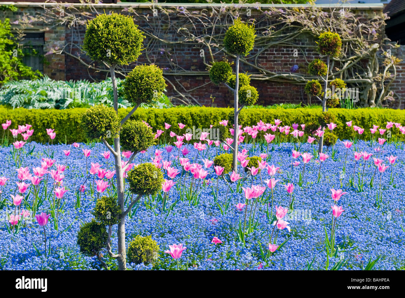 Spring in Golders Hill Park , ornamental gardens with colourful display of tulips , forget-me-not & privet hedges - Stock Image