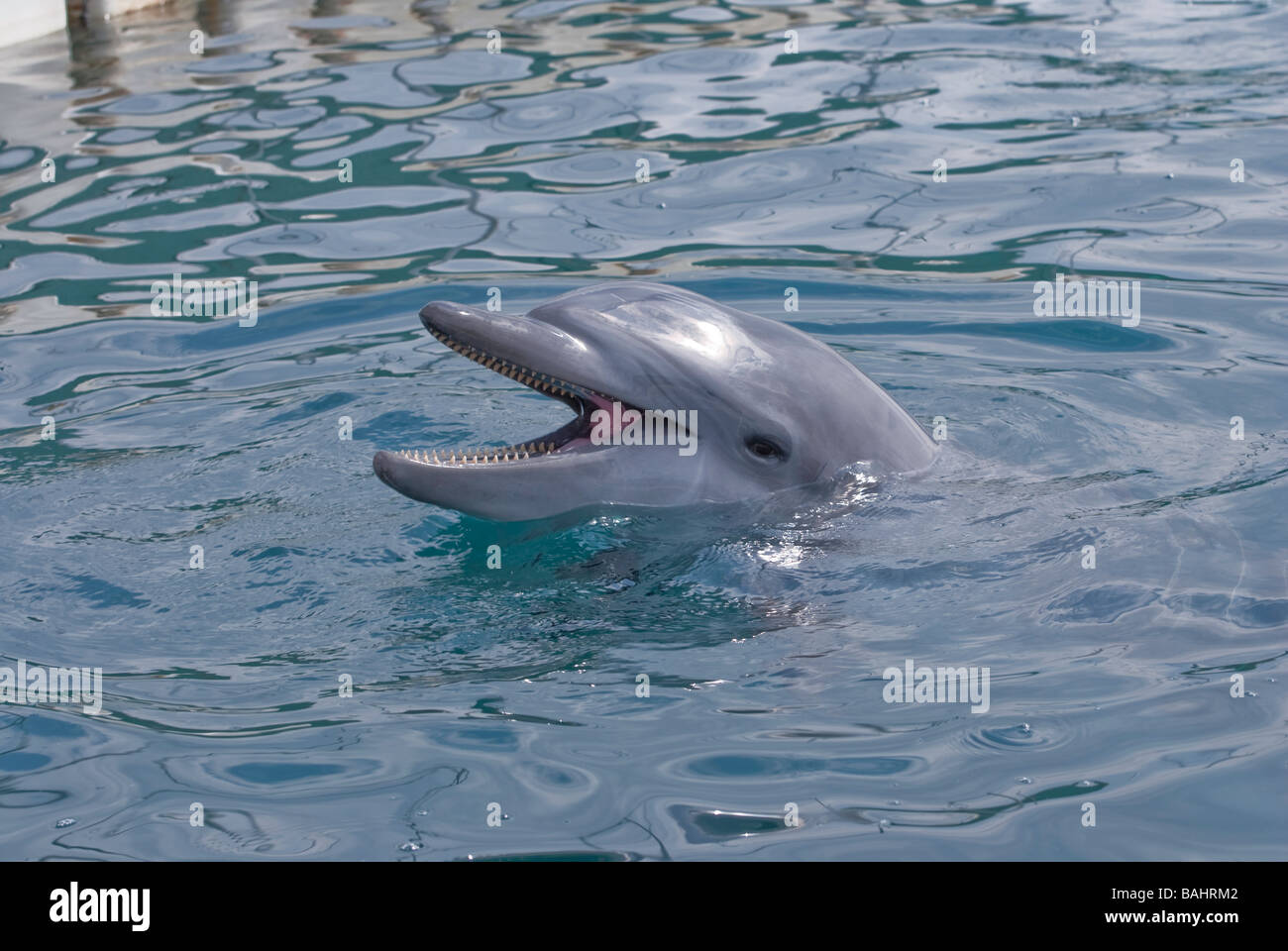Dolphin coming to say hello Stock Photo