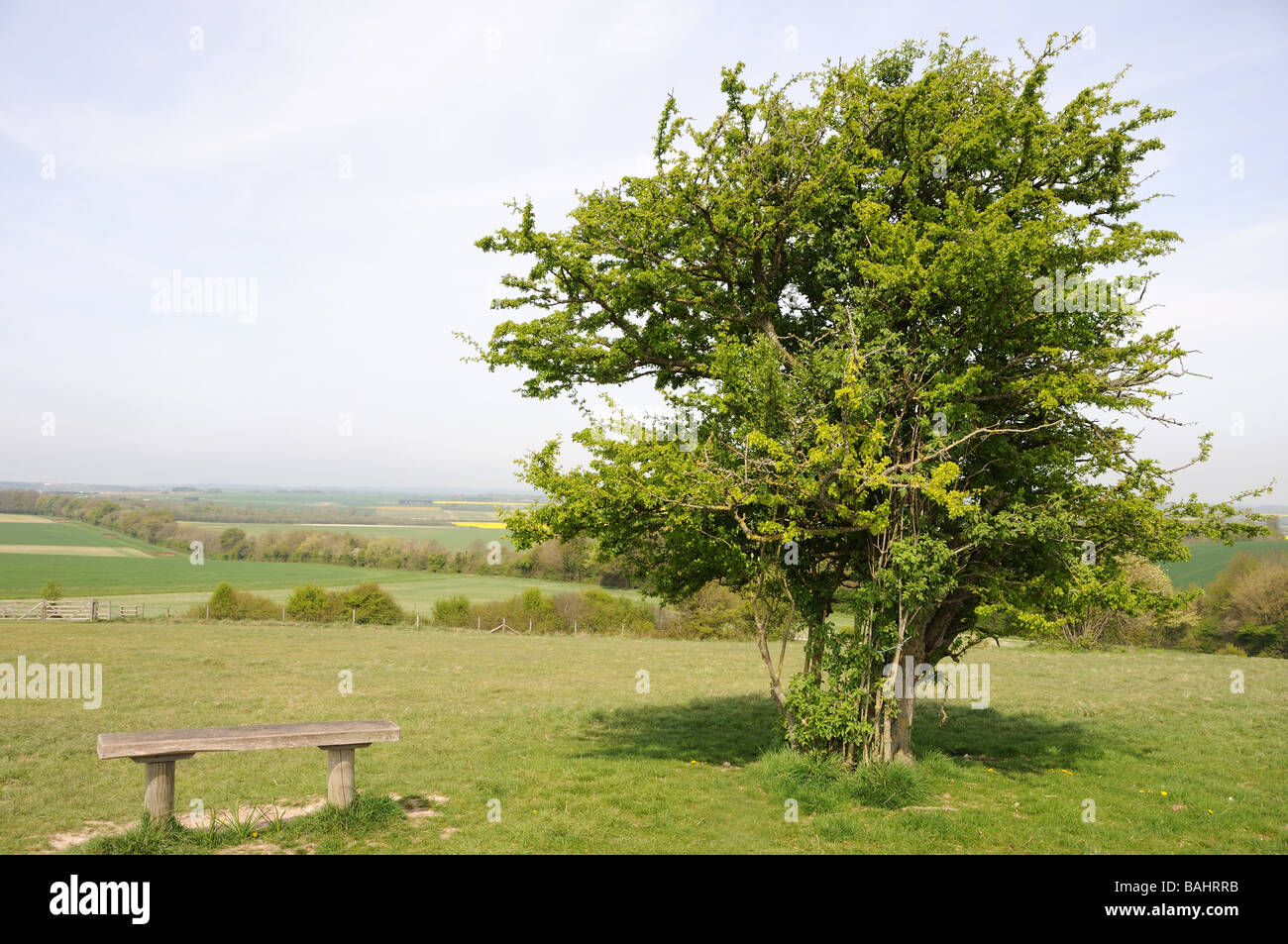 Hawthorn tree bench view - Stock Image