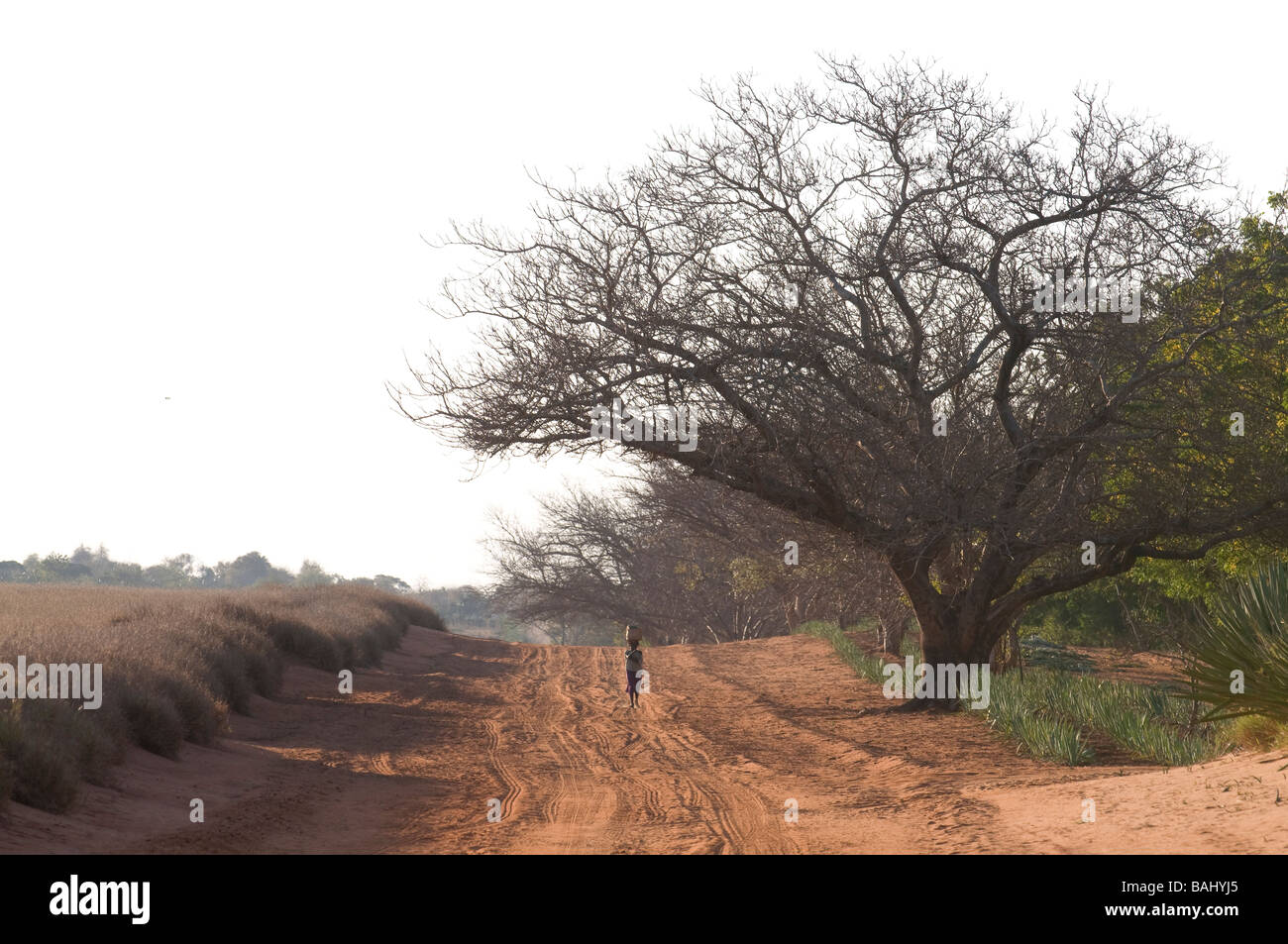 Woman on their way home Berenty Private Reserve Madgascar Africa - Stock Image