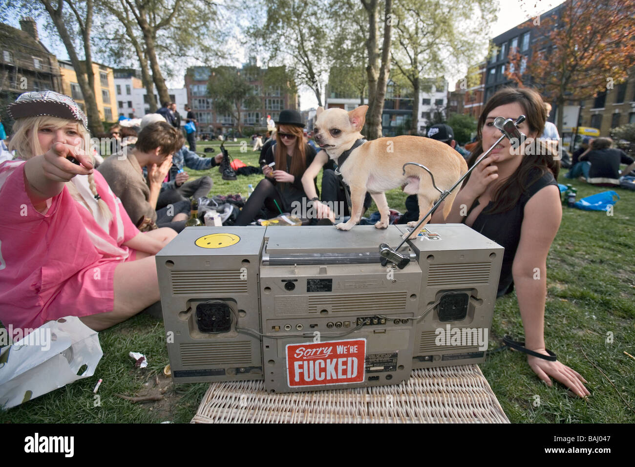 chihuaua on top of a stereo in a london park - Stock Image