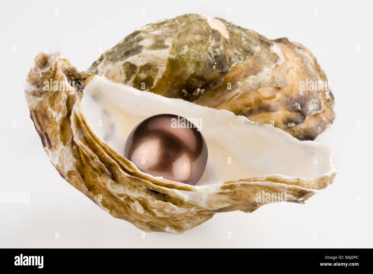 Black pearl is in a shell - Stock Image