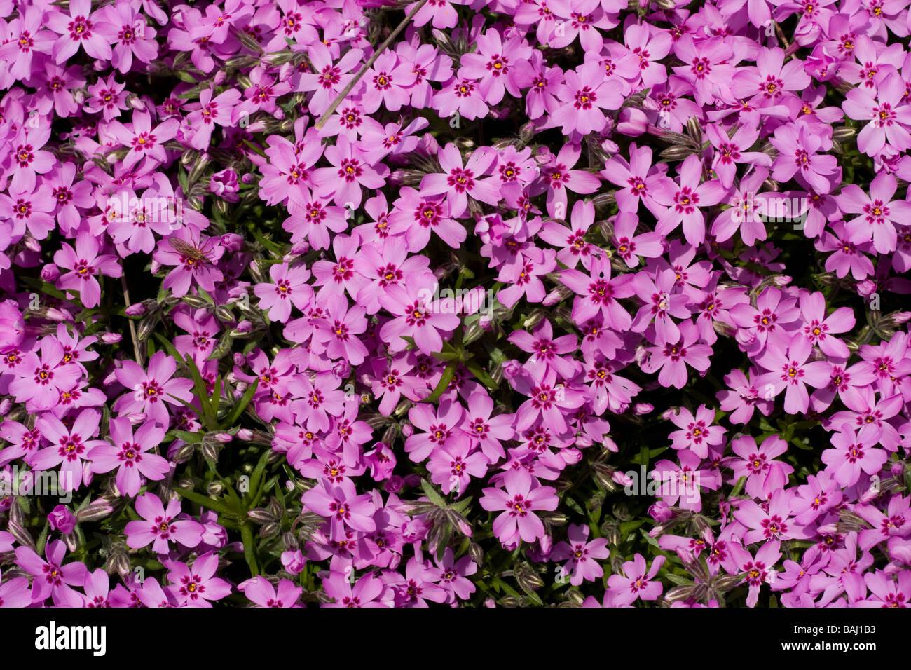 Little Pink Flowers Stock Photo 23753159 Alamy