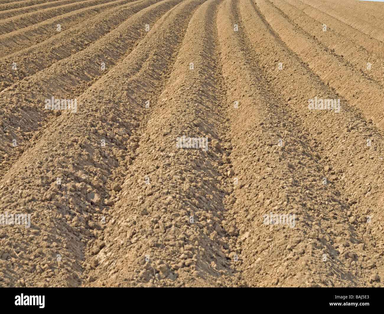 field with earth and new machining grooves in Vogelsberg Hesse Germany - Stock Image