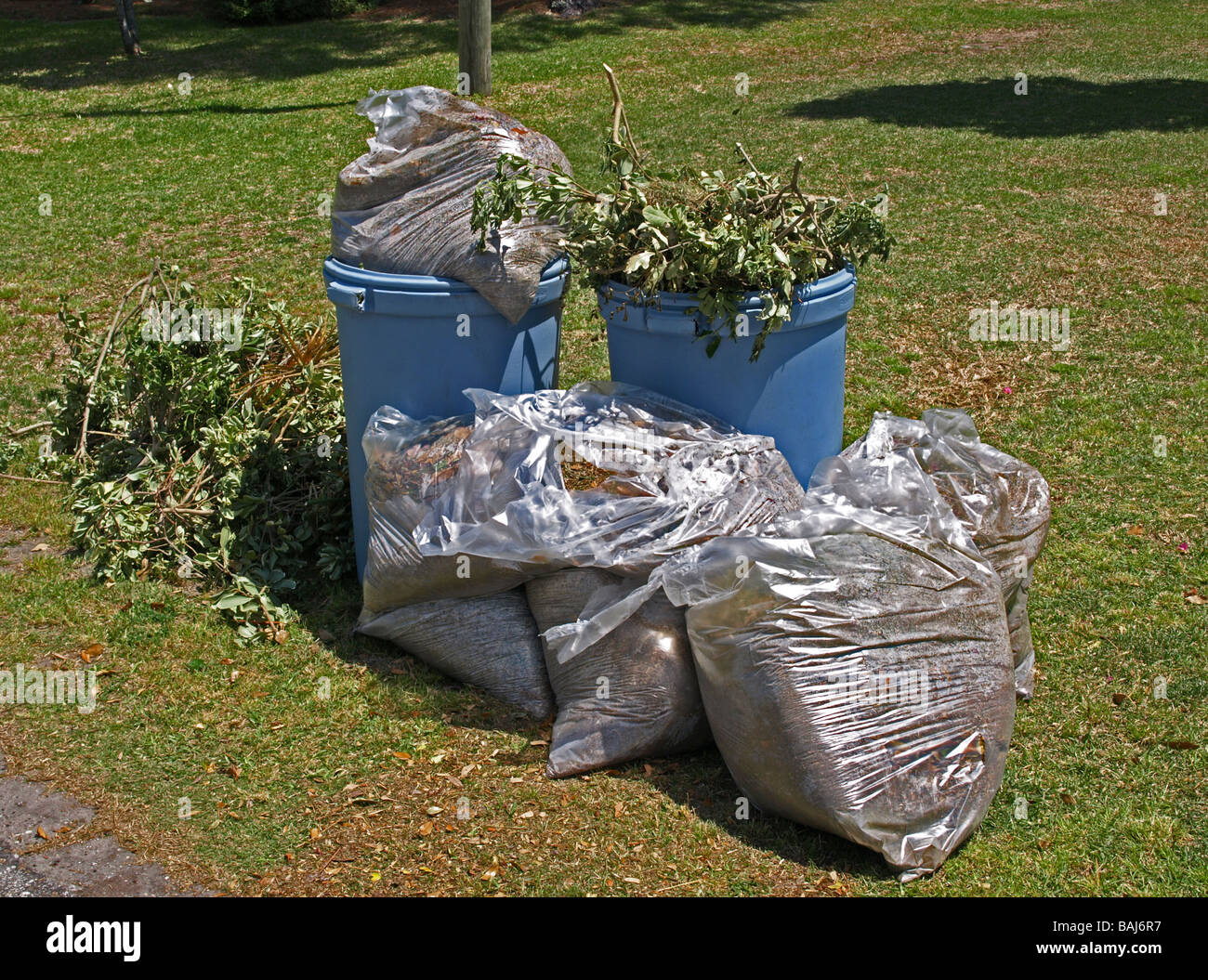 leaves branches clippings and yard waste in clear bags and blue barrels awaiting pickup against a green yard lawn - Stock Image